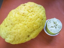 Zitronat-Zitrone, Cedri/Cedro, Zedernfrucht, Cedrat, Zedrat-Zitrone  Judenapfel Sirup