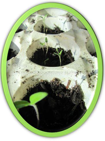 pflanz und s hzeit ist angebrochen testen und bloggen. Black Bedroom Furniture Sets. Home Design Ideas