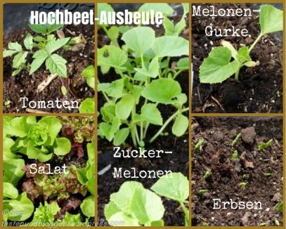 Kräuter Pflanzen Hochbeet