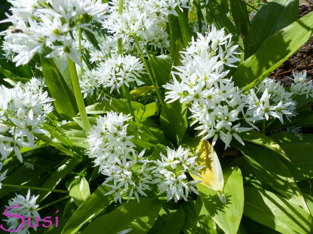 Brilliant Blumen Mai Foto Von