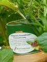 Holland Salatgewürz Gartengewürz