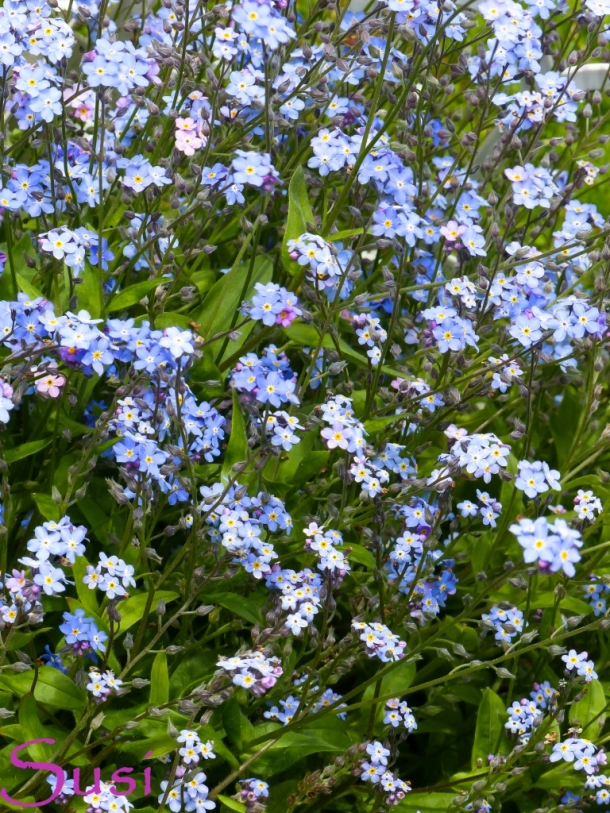 Blumen im Mai