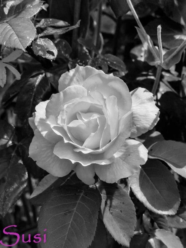 Schwarz Weiß im August