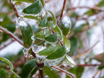 Regen im Januar