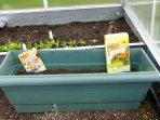 Essbare Blüten Wild Salat von Neudorff #WildgärtnerGenuss