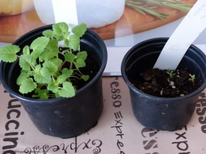Gartenupdate Tomaten, Gurken & Co.