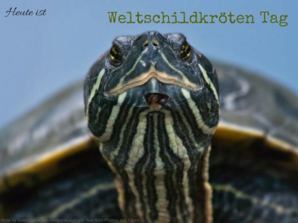 Weltschildkröten Tag