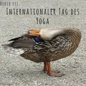 Internationaler Tag des Yoga