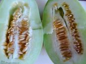 Gurkenmelone Melonengurke