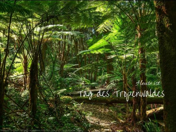 Tag des Tropenwaldes