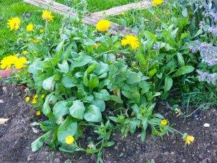 Gartenjahr geht zu Ende Essbare Blüten Neudorff Ringelblume