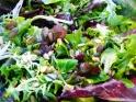 Bonduelle Salatlust Vital-Kerne Cranberry