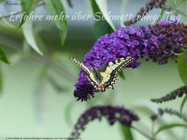 Erfahre mehr über Schmetterlinge Tag