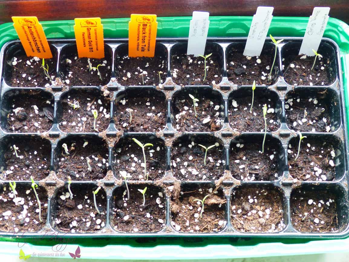 wenn aus samen kleine tomaten werden testen und bloggen. Black Bedroom Furniture Sets. Home Design Ideas