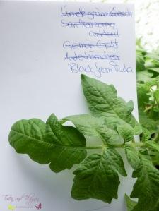 Blätter von Tomatensorten Vergleich Black from Tulla Tomate