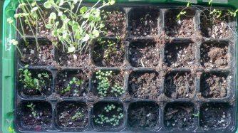 Sähen und Pflanzen Kräuter und Blumen