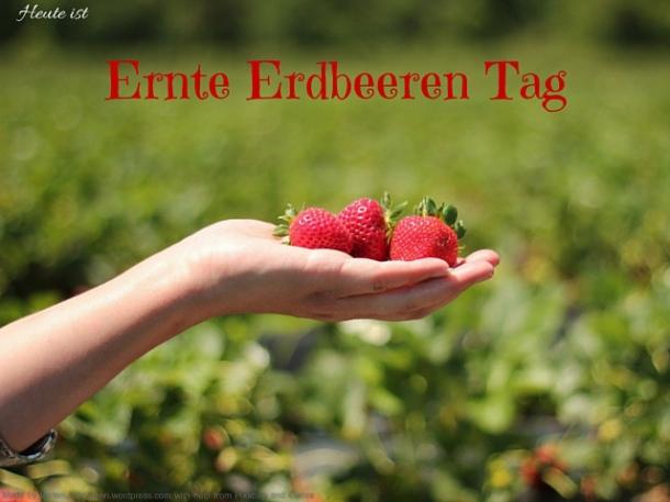 Heute ist ernte Erdbeeren Tag (2)
