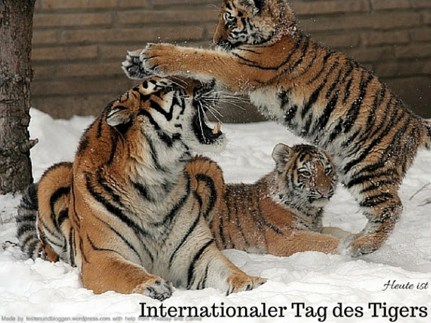 Internationaler Tag des Tigers
