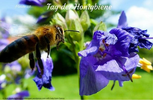 Heute ist Tag der Honigbiene-2