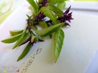 Basilikum Sorten Thai Magic Genovese Neopolitanisch Limonen Pers