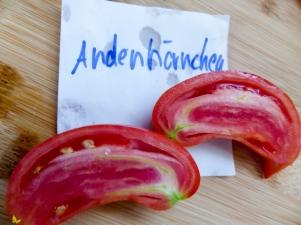 Tomatensorten Andenhörnchen