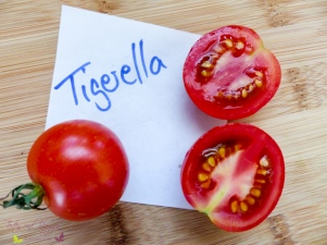 Tomatensorten Tigerella