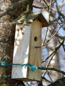 Meisennest Vogelhaus