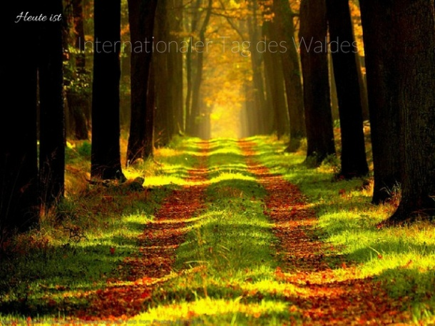 internationaler Tag des Waldes