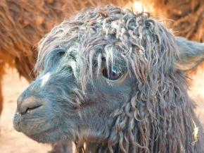 Nie wieder Bad Hair Days: Experten zu Pflege undStyling