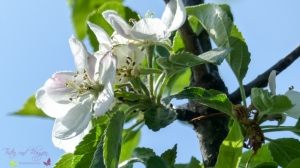 Blütenpracht trotz Wintereinbruch