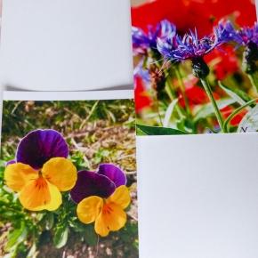 Die Qualität bei Kopie und Druck bei Bilder und Fotos beim HP OfficeJet Pro6960