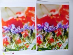 HP 6960 Bilder Drucken Test