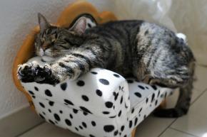 Na dann, gute Nacht! So gelingt das Wohlfühl-Ambiente für erholsamenSchlaf