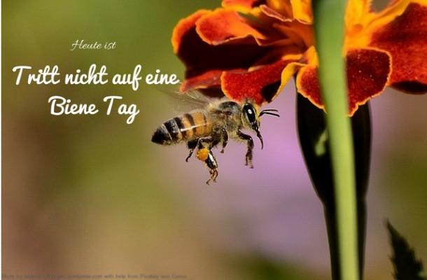 Heute ist: Tritt nicht auf eine Biene Tag