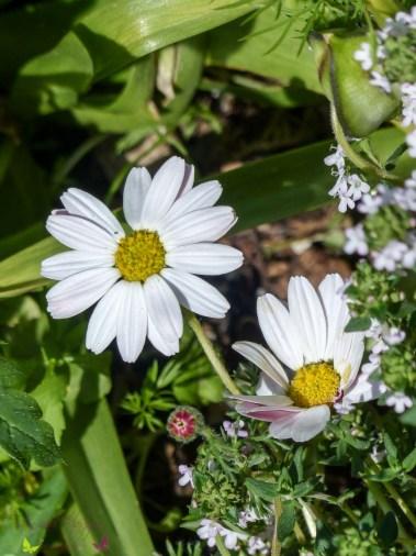 Gartenrundgang Teil 1 - Von Knollenpflanzen und gekauften Pflanzen