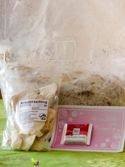 Pilzmännchen Kräuterseitling Pilzzucht Frauentag getrocknet (2 von 2)