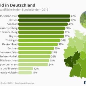 Der Wald inDeutschland