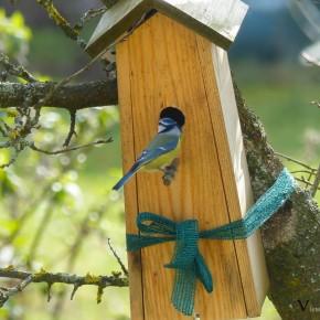 Wohnhaus Besichtigung Blaumeise
